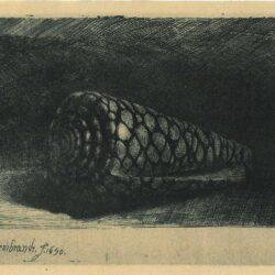 Rembrandt ets, Bartsch B. 159, De schelp (Conus marmoreus)